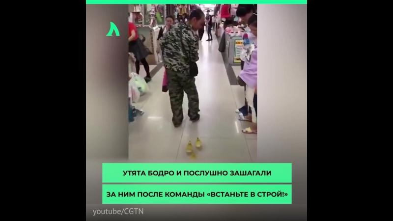 Утята на шоппинге | АКУЛА