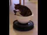 Cat Sits in Bowl on Top of Robotic Vacuum - 993279