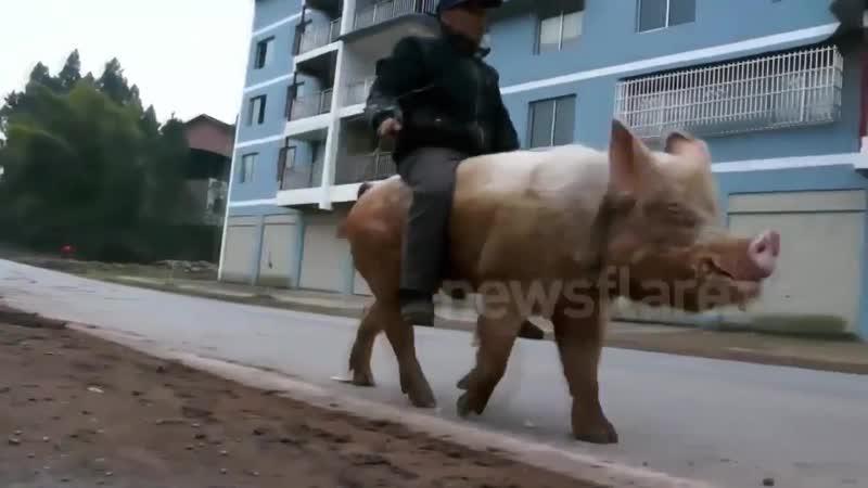 BEST CUBE 366 _ ЛУЧШИЕ ПРИКОЛЫ