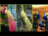 Florist Flower Arrangement Beautiful Flower peacock styles Biggest Arrangement Design