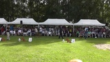 Atibox World Boxer Dog Show 2013 Hungary - Open Fawn Males Selections