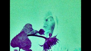 Bellatrix? - Home Alone Thinking It's Finally Over (Svbterrean Tapes 007)