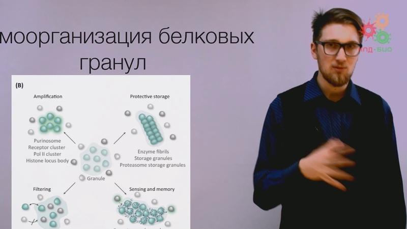Биологические макромолекулы. Эволюция и самоорганизация белков - Даниил Никитин