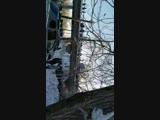 Live: Жесть Поморья: Архангельск Северодвинск регион