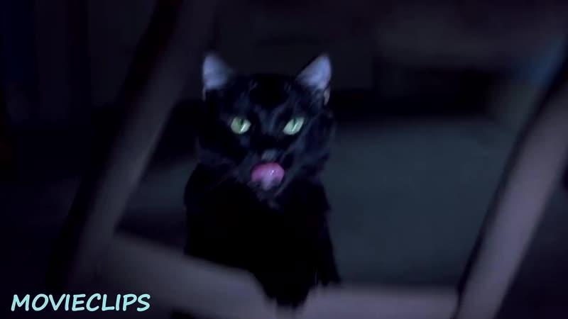 Бешенная киса — «Очень страшное кино 2» (2001) сцена 3_7 QFHD