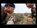 Лечебный гриб Кордицепс