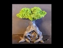 DIY Secret Door Tree Fairy House In Polymer Clay Tutorial