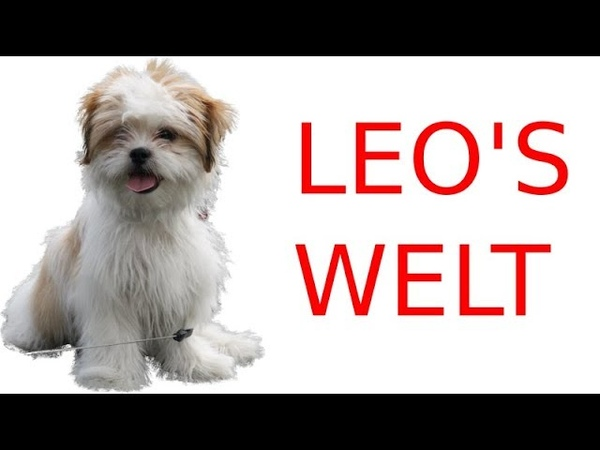 Leo's Welt Ich will Pferde