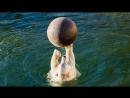 Урок водной гимнастики от нашего белого мишки Сису!