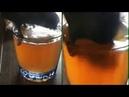🍻 Попугай пьёт пивас | Parrot drinks beer