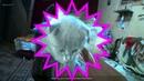 Познакомьтесь с моим новым другом - котенком Скоттиш Фолд (Шотландская вислоухая). Scottish Folds - самые очаровательные коты в мире!