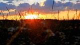Alexander Tarasov Watch The Sunset