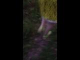 Мини прогулка по лесу
