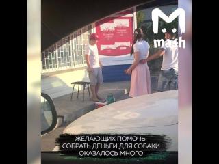 в Ростове 11-летний мальчик продает лимонад, чтобы заработать на лечение собаки