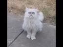 Weird Looking Cat Terrifies Young Man