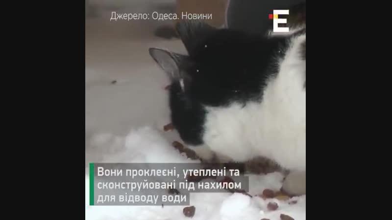 В одеських котів зявилися справжні апартаменти на морському узбережжі. Тут хвостаті можуть вдосталь поїсти та відпочити 😻