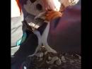 Кошка застряла в бетонной плите