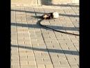 В Джубге парня и девушку во время катания на парашюте откинуло порывом ветра на провода и ударило током