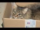 Как бездомная кошка спасла ребенка брошенного матерью у мусоропровода и что случилось потом