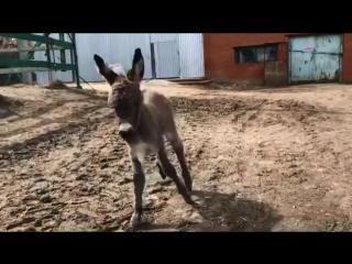 В Челябинском зоопарке пополнение!