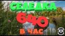 Русская Рыбалка 4!Супер клёв Ахтуба 640 в час 92-78