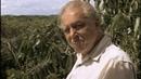 BBC Жизнь птиц Сигналы и песни 6 серия