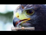 Ahmed Romel - Énouement (Original Mix) [Blue Soho] - PROMO