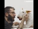 Собака спасла художника от нищеты