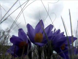 Цветы Башкирии