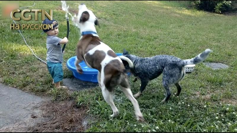 Садовый шланг лучше палки. Собаки Соки и Купер очень любят играть с водой. Правда, иногда их реакция непредсказуема.