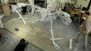 The Ice Bear Project Skeleton