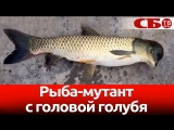 Рыбу-мутанта с головой голубя выловил китайский рыбак