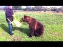 Медведь Дима