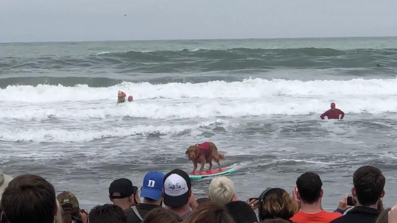 2018 World Dog Surf Championships
