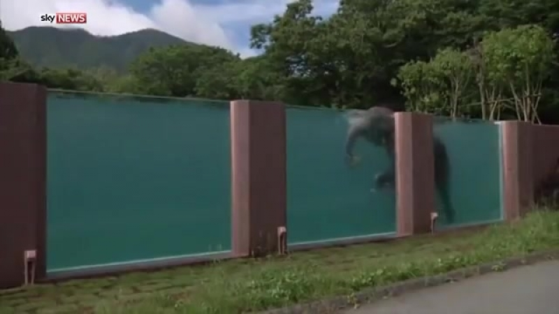 Japanese Zoo Builds Swimming Pool For Elephants