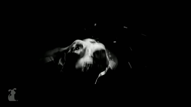 Rihanna - Diamonds - Ruffhanna - Dobermans - Petody