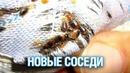 Клопы помогли найти гостиницу гастарбайтеров в ЖК Подольска Подмосковье 2018 г