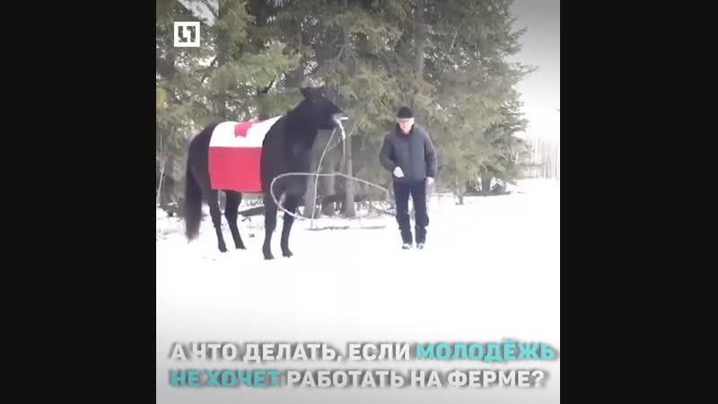Конь-ковбой
