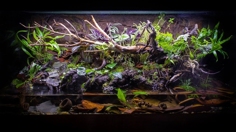 The ULTIMATE Fire-Bellied Toad Paludarium