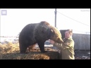 Mansur the bear happy again after rescue from bear baiting station