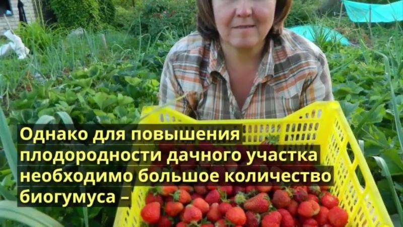 Отечественное биоудобрение для повышения урожайности в 2 раза