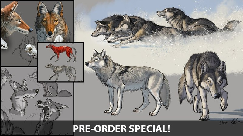 How to Draw Wolves, Coyotes Foxes - Sneak peek (Pre-order Now)
