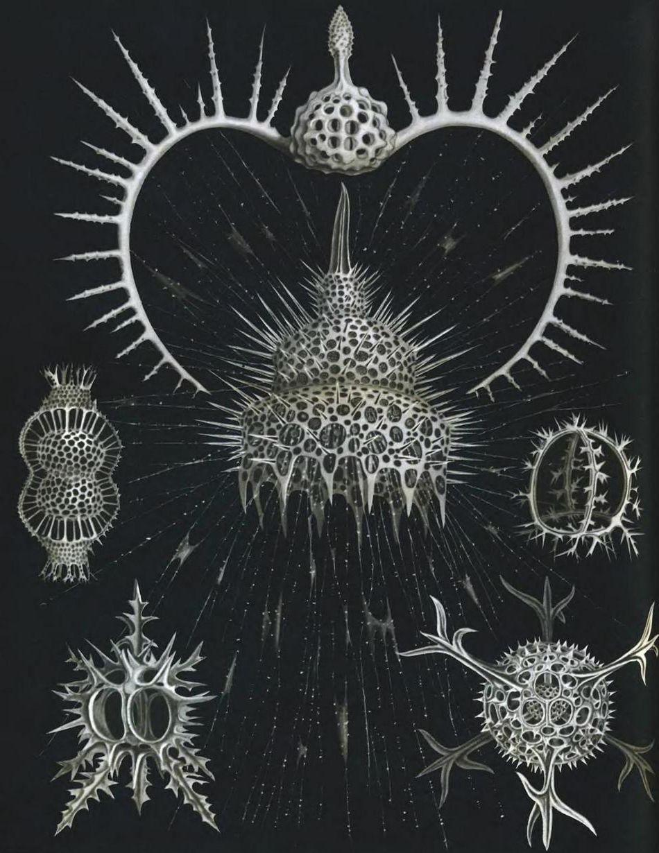 Радиолярии: Одноклеточные, что совершеннее человека