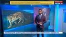 Новости на Россия 24 Нижегородскую область сотрясает скандал из за леопарда на поводке