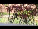 Колибри собирает нектар из цветков алоэ