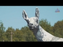 Видео №1: Знакомство с историей зоопарка