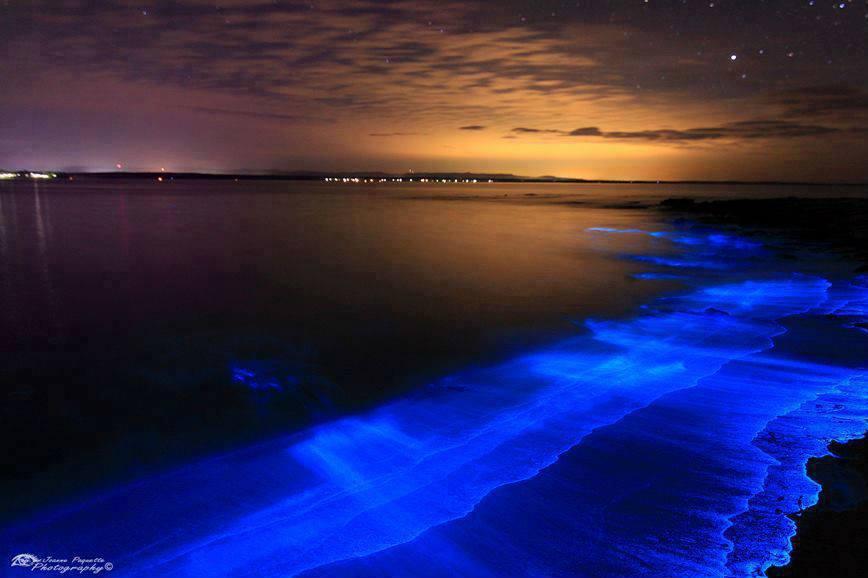 Планктон, изображенный в заливе Джервис, Новый Южный Уэльс, был сфотографирован Энди Хатчинсоном. Энди из Берри, Австралия, говорит: «Эти биолюминесцентные планктоны - это крошечные существа, называемые динофлагеллятами, которые излучают свет, чтобы избежать хищников.