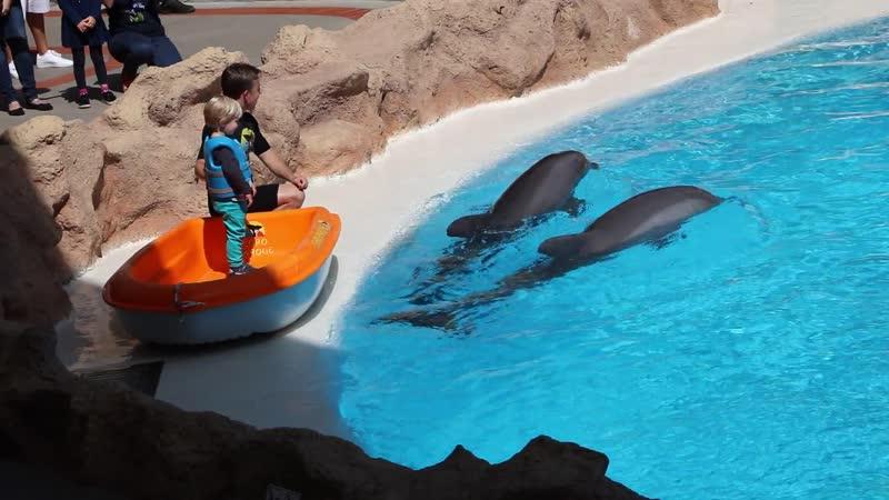 Дельфины Тенерифе