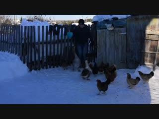 Дрессировка гуся)