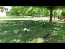 ВездеСледы - Голуби летят над нашей зоной. Парк Мемориал. Евпатория. Крым.